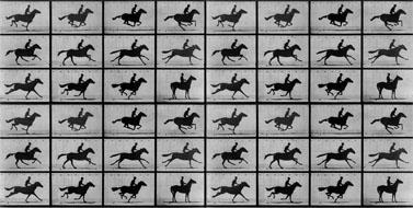"""""""סוס בתנועה"""", אדוארד מויברידג' (נחלת הכלל)"""