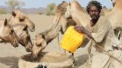 רועה וגמלים בסודן (צילום: SOS Sahel UK; רשיון CC BY-NC-ND 2.0)