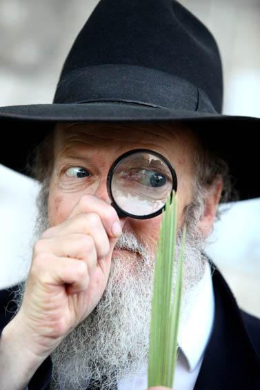 יהודי חרדי בוחן לולב בשוק ארבעת המינים במאה-שערים, ירושלים. 2010 (צילום ארכיון)