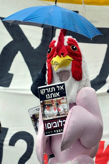 הפגנה נגד תנאי גידול תרנגולות, אתמול בירושלים (צילום: יואב ארי דודקביץ')