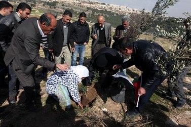 פלסטינים נוטעים עץ בבית-איכסא שליד ירושלים, במחאה על ההחלטה לבנות את חומת ההפרדה על אדמות כפרם (צילום: עיסאם רימאווי)