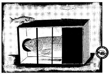 איור: רקפת כנען