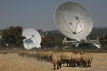 עדר וצלחות תקשורת בעמק האלה (צילום: נתי שוחט)