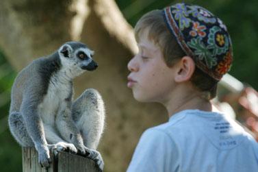 """תמונה מהווי גן-החיות התנ""""כי בירושלים (צילום: פלאש 90)"""