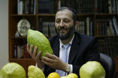 אריה דרעי בוחן אתרוג, אתמול במשרדו בירושלים (צילום: מיכל פתאל)