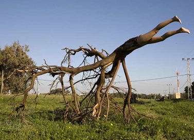 פסל ליד ארסוף (צילום: מתניה טאוסיג)