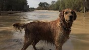 הכלב פוקר בדרך המוצפת סמוך לקיבוץ צאלים, אתמול (צילום: צפריר אביוב)