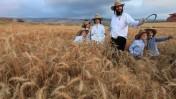 יהודים דתיים מקיימים את מצוות העומר בשדה ליד מודיעין (צילום: נתי שוחט)