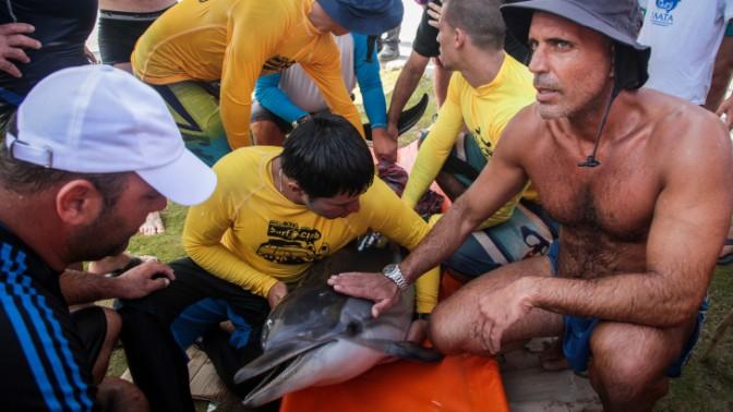 עוברים ושבים מנסים להציל דולפינה שנקלעה לחוף בחיפה, שלשום (צילום: אבישג שאר-יישוב)