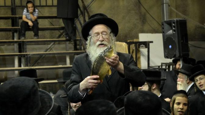 יהודי חרדי מדגים טקס כפרות על קרפיון. ירושלים, 11.9.2013 (צילום: יוסי זליגר)