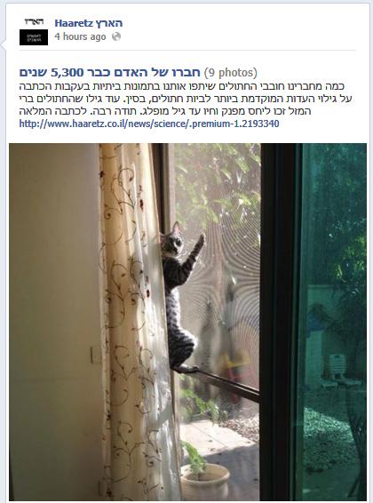 """הזמנה לשליחת תמונות חתולים, דף הפייסבוק של """"הארץ"""""""