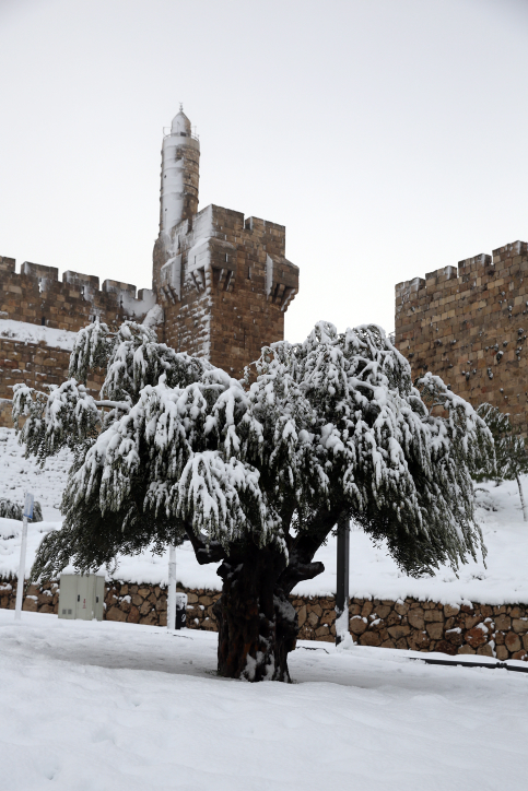 מגדל דוד בירושלים, 14.12.13 (צילום: נתי שוחט)