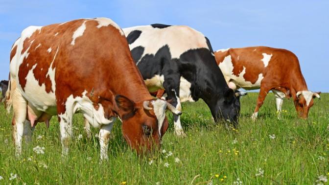 """""""מבקרי התקשורת ומבוקריהם חיים באותו שדה מרעה, אוכלים אותו עשב ומייצרים אותה תוצרת"""" (צילום: שאטרסטוק)"""