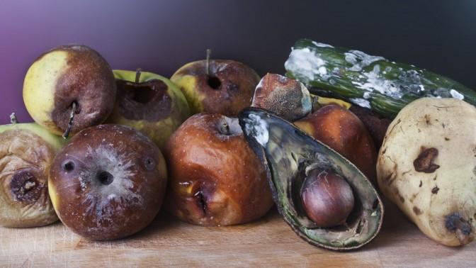 (צילום פירות רקובים: שאטרסטוק)