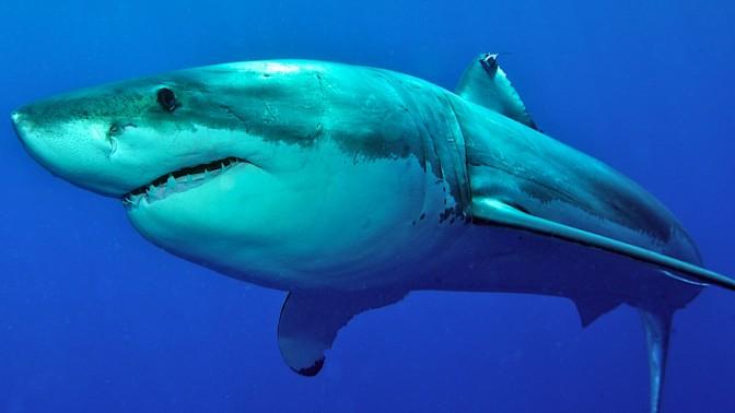 (צילום כריש: שאטרסטוק)