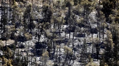 נזקי השריפה ביער ירושלים, 26.6.14 (צילום: מרים אלסטר)