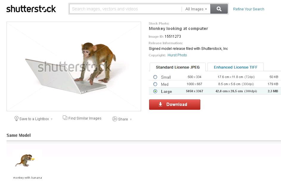 קוף שחתם על טופס ויתור זכויות באתר שאטרסטוק