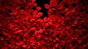 (צילום עלי ורדים: שאטרסטוק)