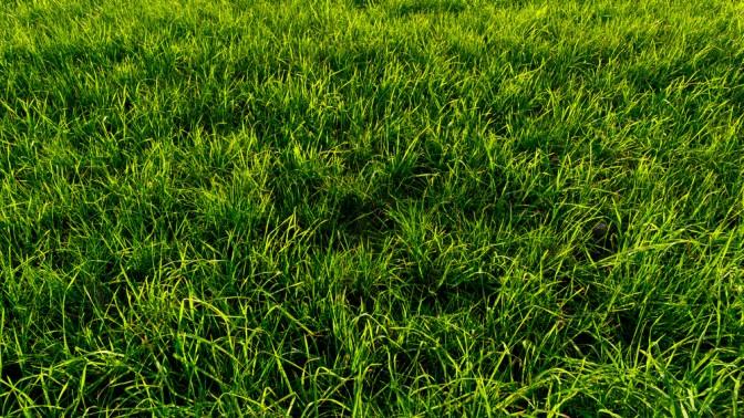 (צילום דשא: שאטרסטוק)