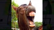(צילום סוס: lizzyliz, רשיוןCC0 Public Domain)