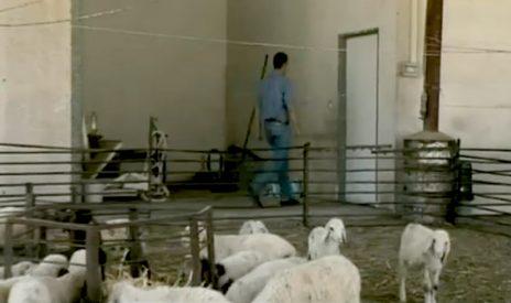 """גלעד שרון צועד אל עבר הארכיון של אביו בחוות השיקמים. מתוך התוכנית """"עובדה"""", 2011 (צילום מסך)"""