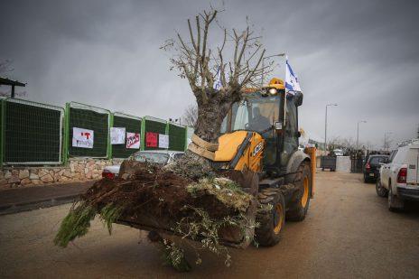 שופל ישראלי נושא עץ עקור בהתנחלות עפרה, 1.3.17 (צילום: הדס פרוש)