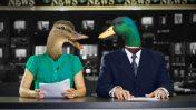 ברווזים באולפן (איור: העין השביעית)