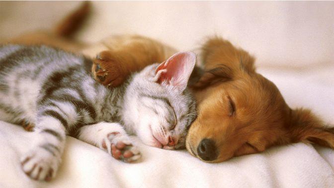 חתול וכלב (צילום: kitty.green66, רישיון CC-by-SA-2.0)