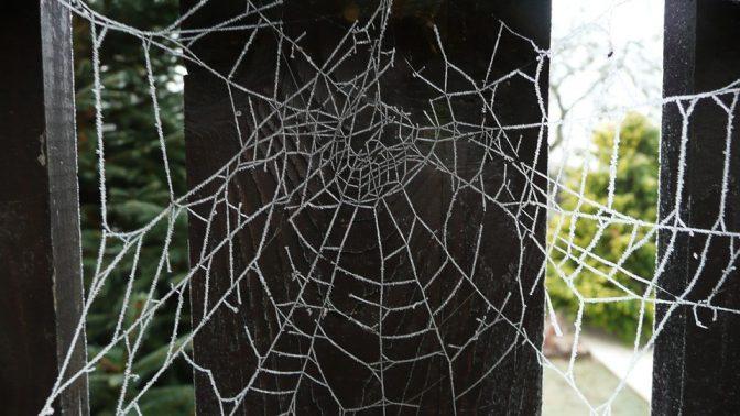 רשת עכביש (צילום: מקס פיקסל, רשיון CC0)